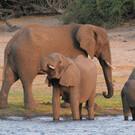 Botswana & Simbabwe
