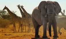 Aktivitäten im Etosha Nationalpark