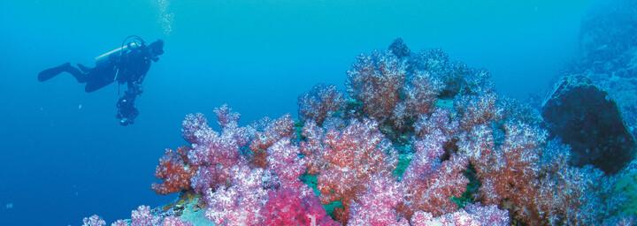 Tauchen Ningaloo Reef