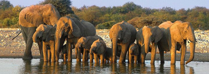 Elefantenherde am Wasserloch im Etosha Nationalpark, Namibia