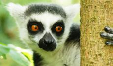 Auf den Spuren der Lemuren