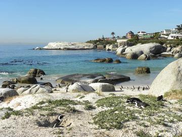 Südafrika Reisebericht: Boulders Beach