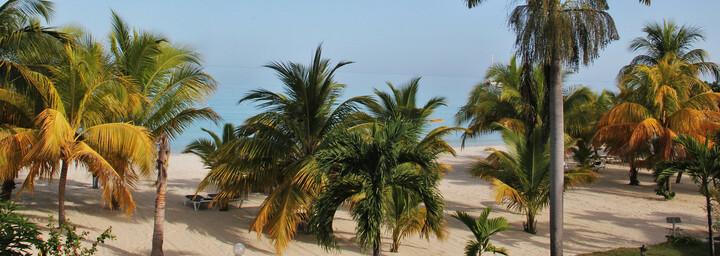 Jamaica Palmen