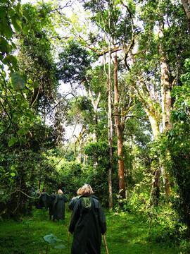 Kenia Reisebericht - Wanderung im Mount Kenya Nationalpark