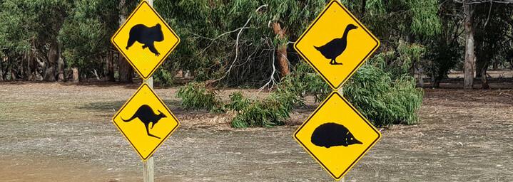 Tierwelt auf Kangaroo Island