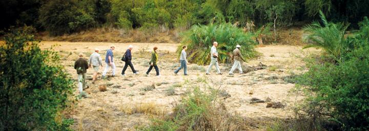 Buschwanderung im Balule Game Reserve