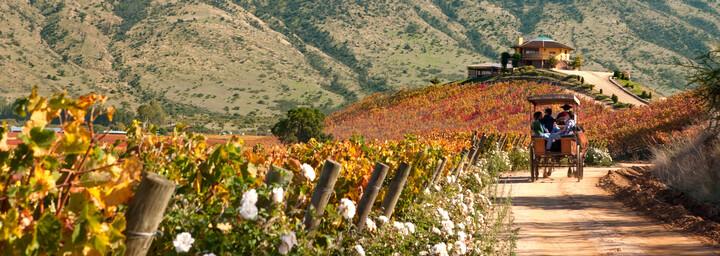 Colchagua-Tal in Chile
