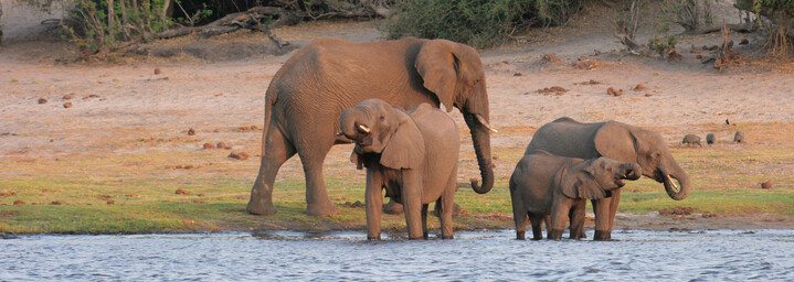 Elefantenfamilie am Wasserloch im Chobe Nationalparkl, Botswana