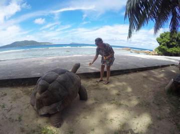 Reisebericht Seychellen - Begegnung mit einer Riesenschildkröte auf La Digue