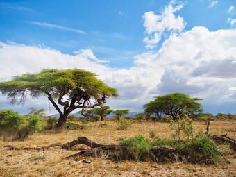 Kenia Reisebericht - Samburu Nationalreservat