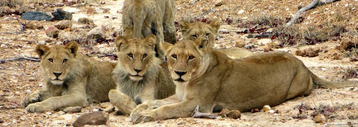 Krüger Nationalpark in Südafrika