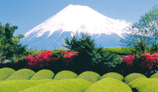 Fuji Tour