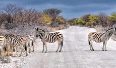 Klassisches Namibia inkl. Flug