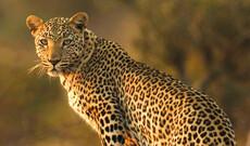 Atemberaubendes Namibia