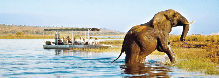 Bootsfahrt Chobe Nationalpark