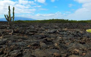 Galápagos Reisebericht - Vulkanische Landschaft Insel Fernandina