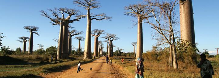 Baobab Allee in Morondava