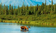 Erlebnis Alaska & Yukon