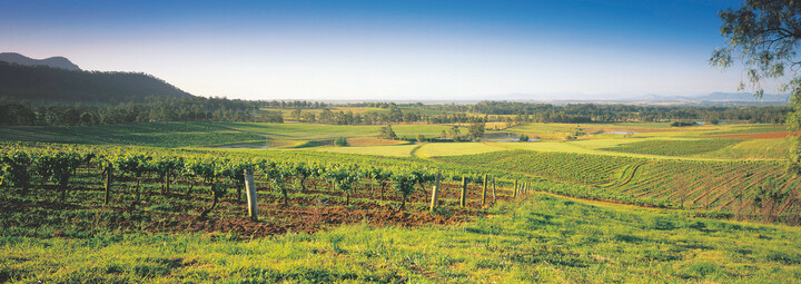 Weinanbaugebiet Hunter Valley in Australien
