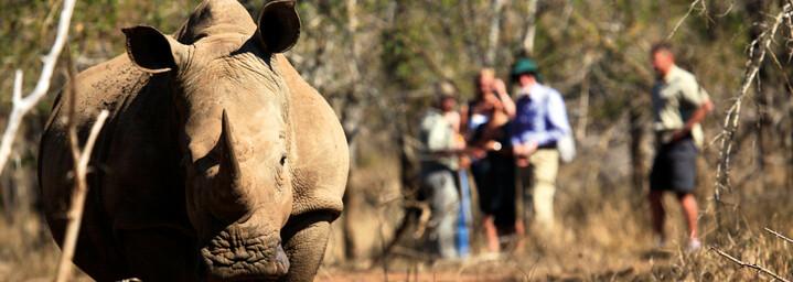 Nashorn Tracking im Matobo Nationalpark