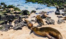 Galápagos entdecken