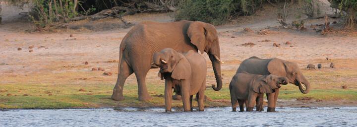 Chobe Nationalpark Botswana