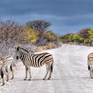 Namibia aktiv entdecken