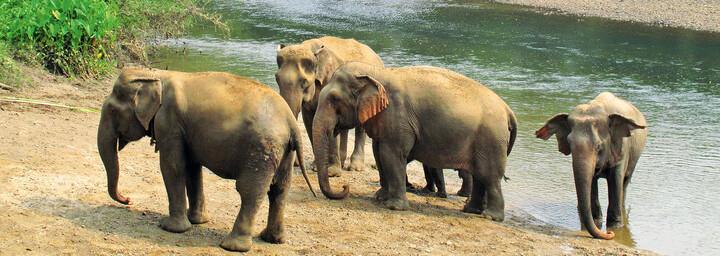 Elefanten in Khao Yai Nationalpark