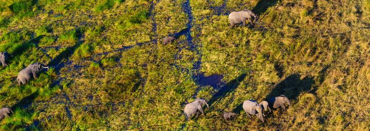 Luftaufname von Elefanten im Okavango Delta