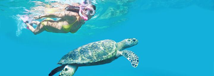 Schnorchlerin mit Schildkröte