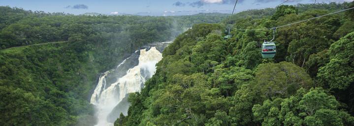 Regenwald -  Tropical North Queensland
