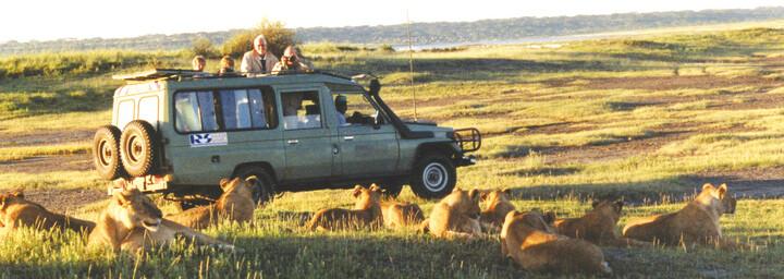 Safari Jeep vor Löwenherde