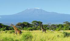 Kenia - Safari & Strand