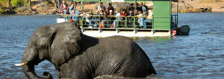 Elefant und Boot auf Chobe Fluss