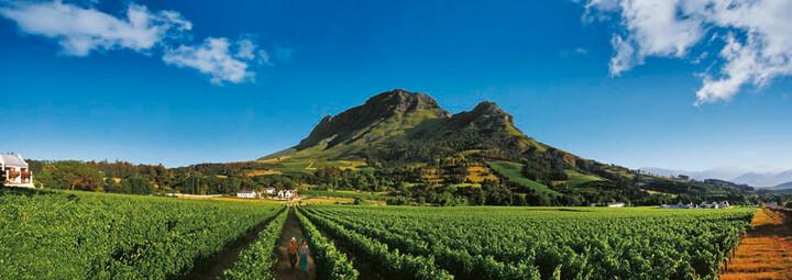 Weinregion Südafrika