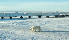 Tundra-Buggy-Tour zu den Eisbären
