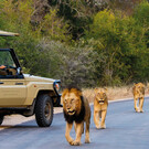Abenteuer Krüger Nationalpark